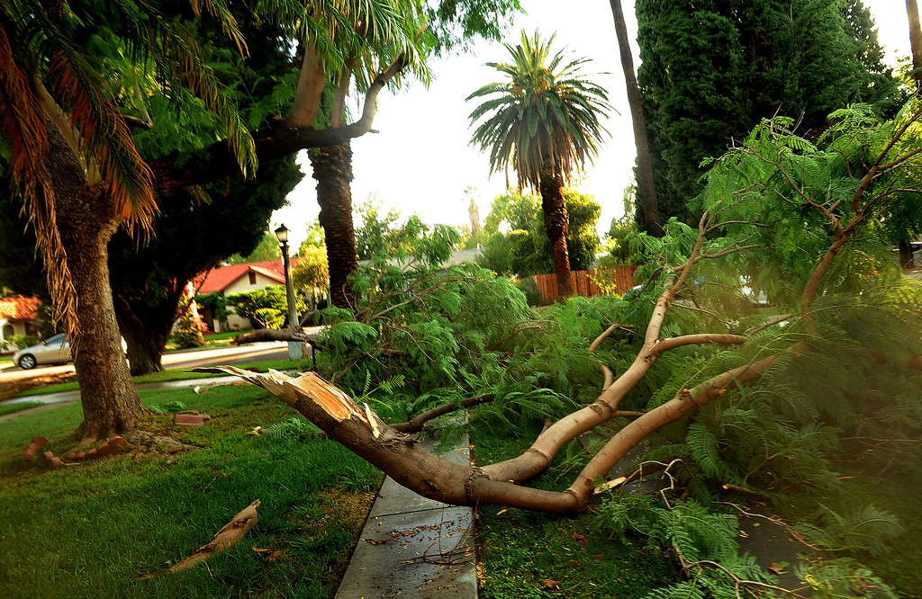 . A tree branch blocks a driveway along the 3800 block of Beechwood Place in Riverside August 29, 2013.   GABRIEL LUIS ACOSTA/STAFF PHOTOGRAPHER.