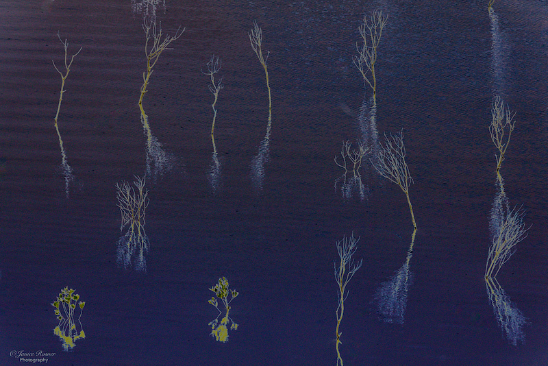 Water plants 2
