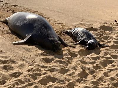 2021 Monk Seals at OCC