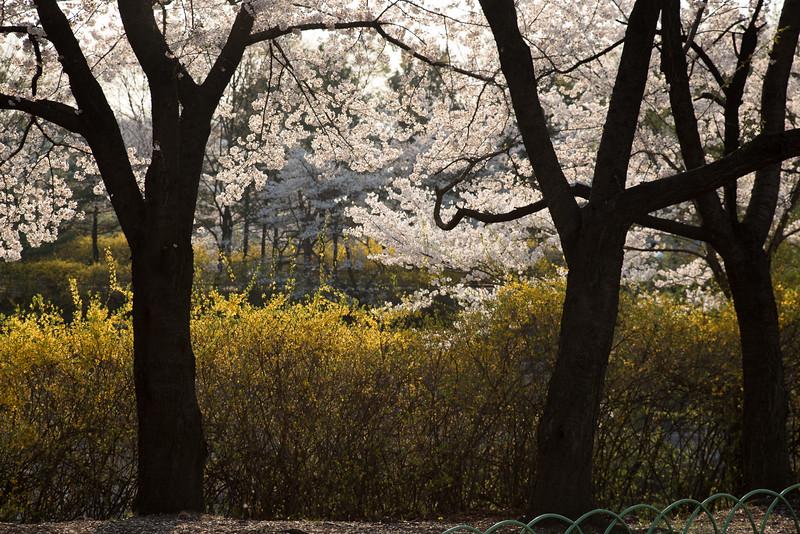 AISA_2015_Korea-40.jpg