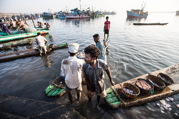India: Fish Market