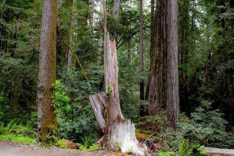 redwoodsFin-0992.jpg