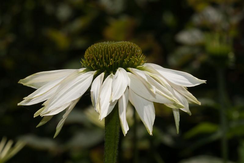 2009 06 30_NY Botanical Gardens_0773.jpg