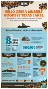 zebra-mussels-discovered-in-canyon-lake