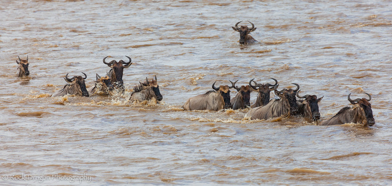 North_Serengeti-77.jpg
