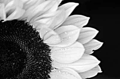 Flowers in Monochrome