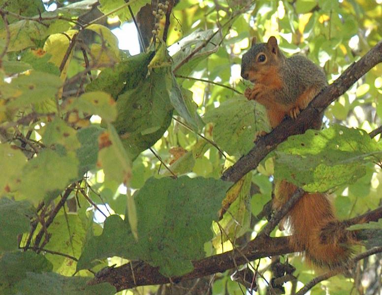 clip-015-squirrel-wdsm-04oct03-c1-a.jpg