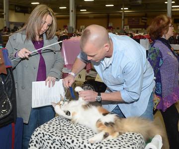 CFA Cat Show at Oaks