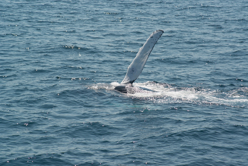 humpbacks-4109.jpg