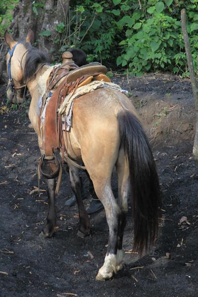 Za turystami krok w krok jadą chłopaki na koniach, czekajac az ktos wymieknie i skusi sie na latwiejszy sposób wspinaczki