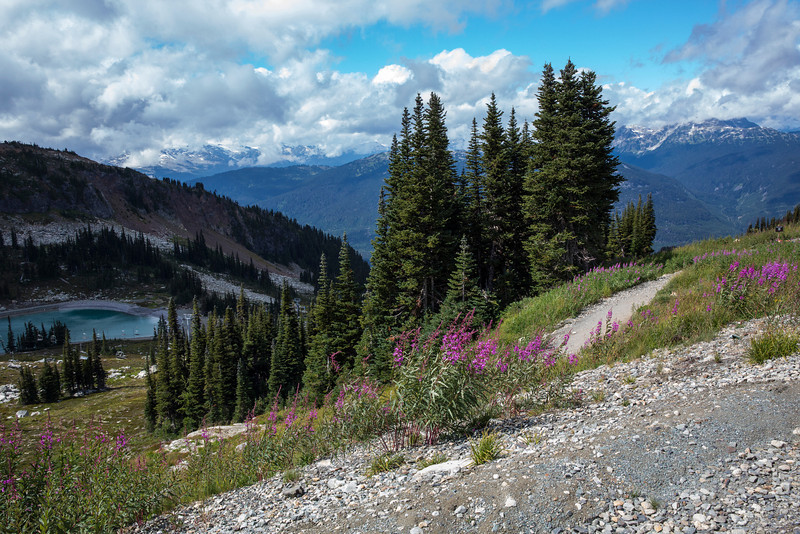 View from the Whistler Mountain -4229.JPG