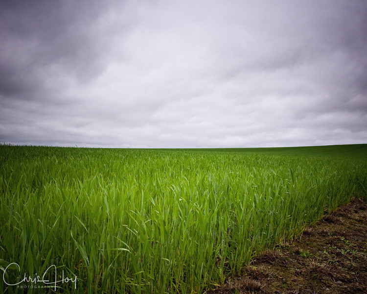 Stormy Grass.jpg