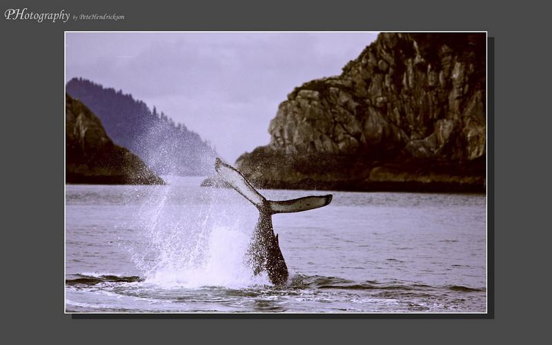 My Alaska 12-08-101.jpg