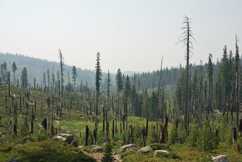 Yosemite_01_(DSC_3993).jpg
