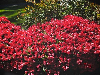 Flowers of Portland & elsewhere...