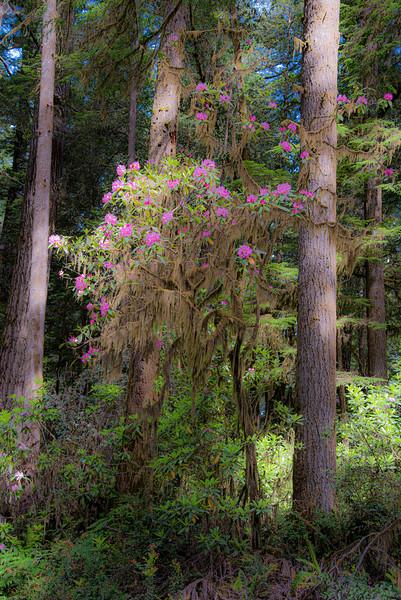 redwoodsFin-0932.jpg