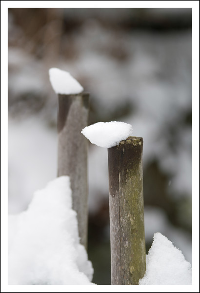 Snow on a bamboo fence post.