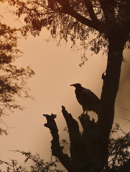 Morning-Vulture-Scape-02.jpg