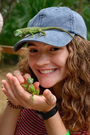 Family Play Time - Iguanas, Sloths, and more