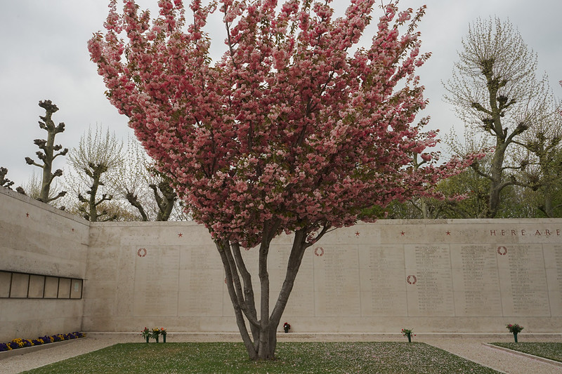 07_Netherlands American Cemetery Cherry Blossoms.jpg