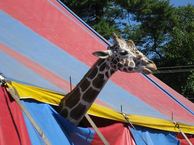 Rochester Fair, September 19, 2009
