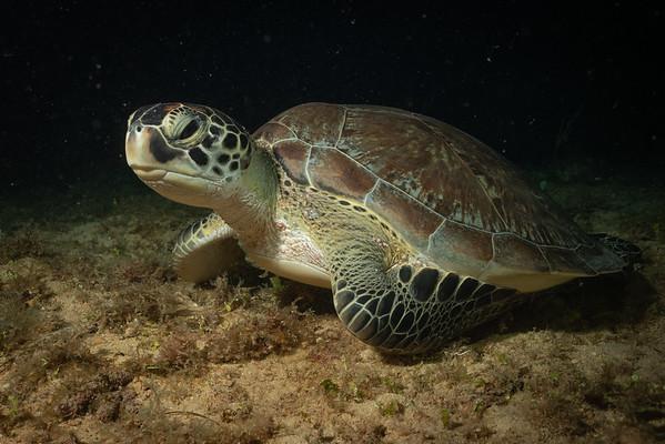 St Maarten SCUBA - November 2019