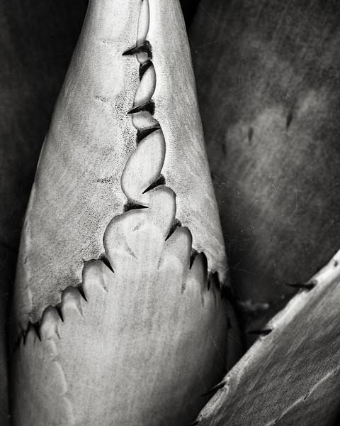 agave-and-cobwebs.jpg