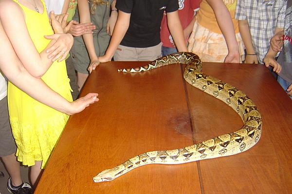 Slangen op bezoek, 3de lj.