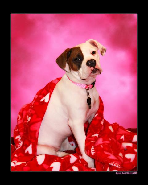 sitting bella pink copy.jpg