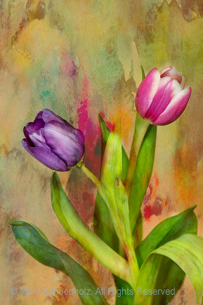 Still Life of Tulips