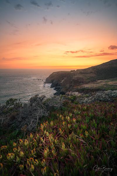 Marin Headlands VI