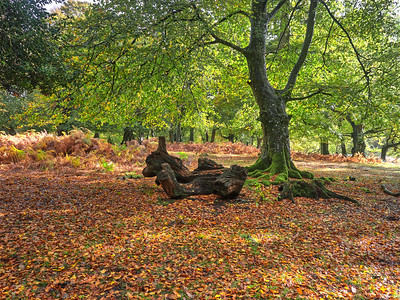 New Forest-October 2020