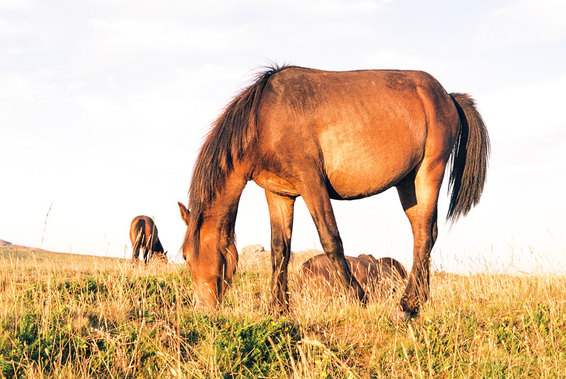 Horses of Dartmoor