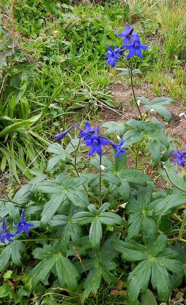 Blue flower5.jpg