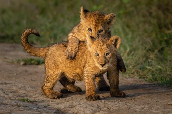 Tanzania- Ndutu