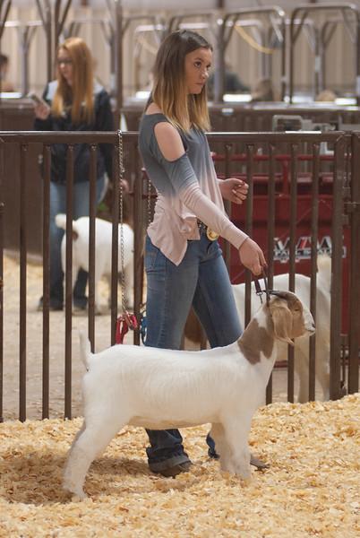 kay_county_showdown_goats_20191207-132.jpg