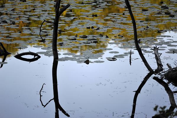 Sur le fil de l'eau bourguignonne