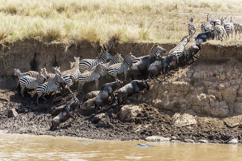 Kenya 2015-03862.jpg