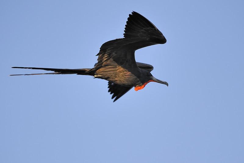 Galapagos Jul 2008 008.JPG