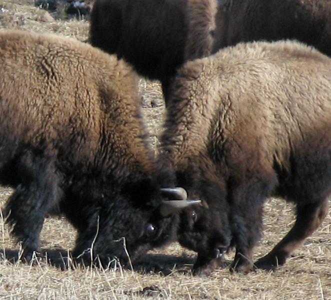 Yellowstone_039.jpg