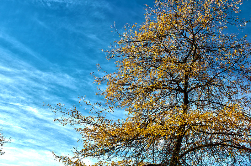 Fall_Colors_HDR13.jpg
