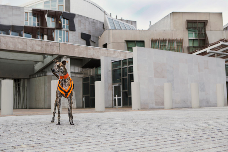 lurcher at Scottish Parliament building