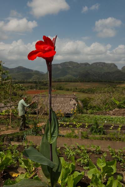 EricLieberman_D800_Cuba__EHL2831.jpg