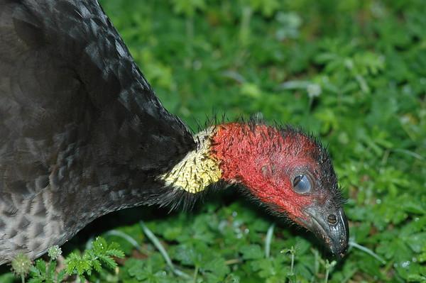 Turkey Australia