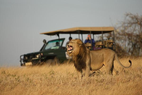 East Africa, Serengeti and Zanzibar - Grumeti River Camp - Day 2