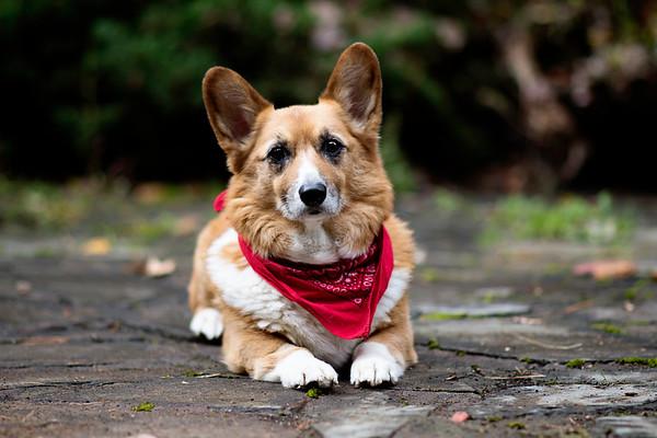 Williamsport Pet Photographer : 10/8/17 Tuco the Dog