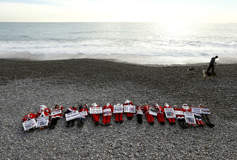 ". Members of the French anti-fur group ""CAFT\"" (The Coalition to Abolish the Fur Trade), dressed up as Santa Claus demonstrate on a beach to denounce the \""horror and suffering that is hidden behind the glamor of fur\"", on December 15, 2012, in Nice, southeastern France. VALERY HACHE/AFP/Getty Images"