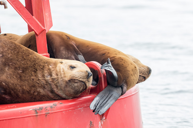 Alaska 2015 - Sitka -  072515-343.jpg