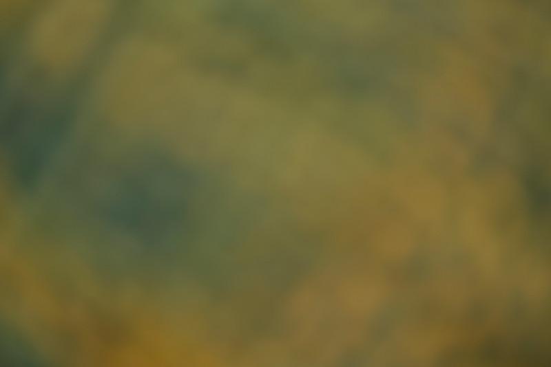 Colour Washes BH5A7067.jpg