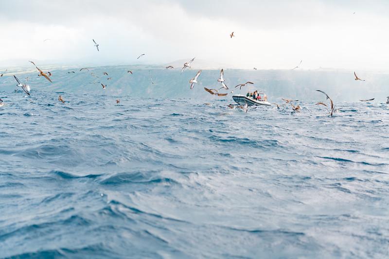 Azores-56.jpg